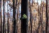 Seri doğa ve çevre onur ödülüRodrigo Cabrita