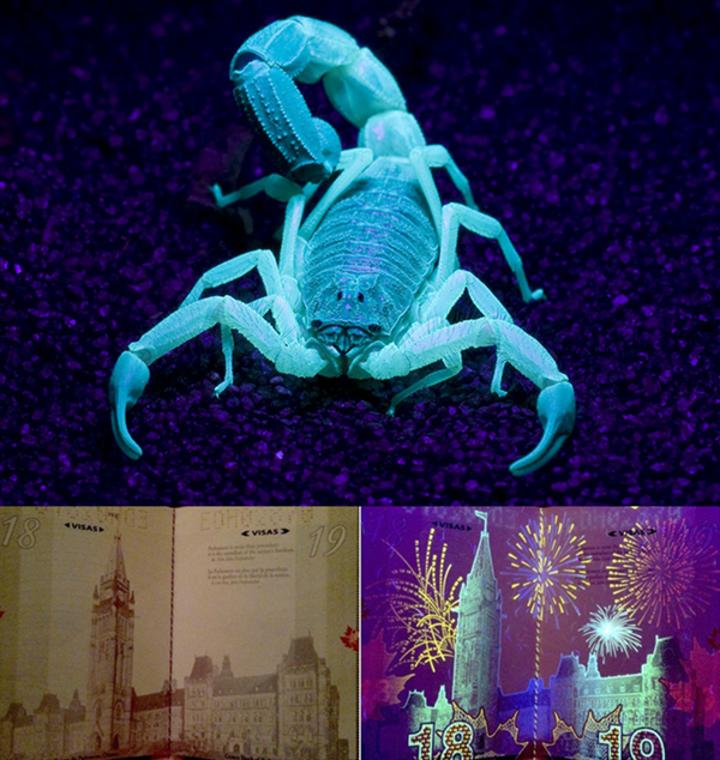 Akıllı telefonlar için UV ışık birimi: ReveaLED