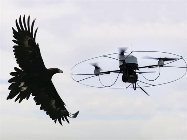 Eğitimli kartallar izinsiz drone'ları havada yakalayacak