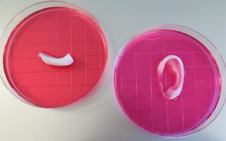 3D yazıcılar kullanılarak insan kulağı üretildi
