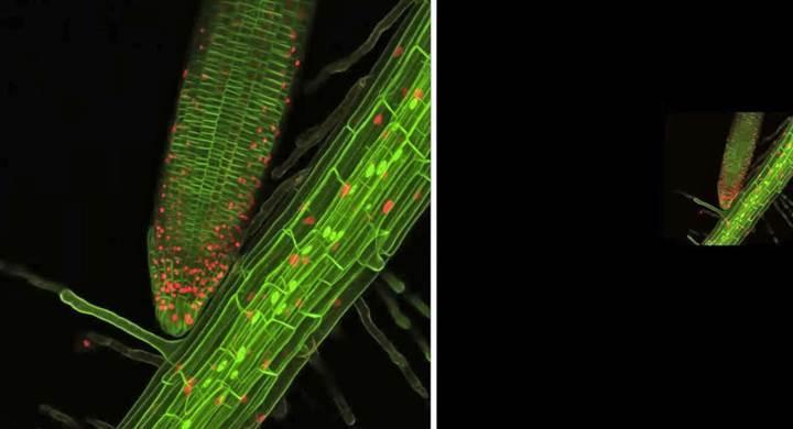 Bitki köklerinin büyümesinin izlenebilmesi için 3D sistem geliştirildi