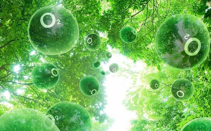 Karbon emisyonunu dengelemek için ağaç dikmek yeterli olmayacak