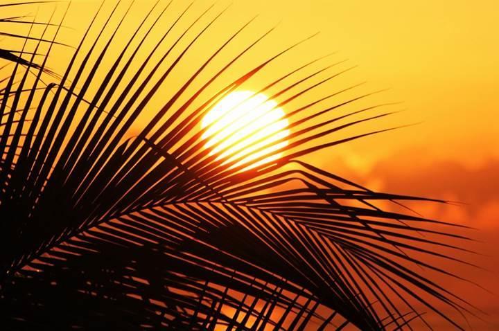 """Güneş'in """"Nemesis"""" adında bir ikizi olduğu keşfedildi"""