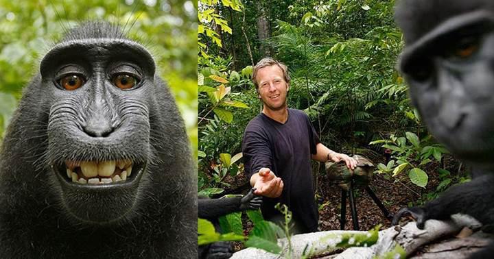 Maymun selfiesi davası sonuçlandı