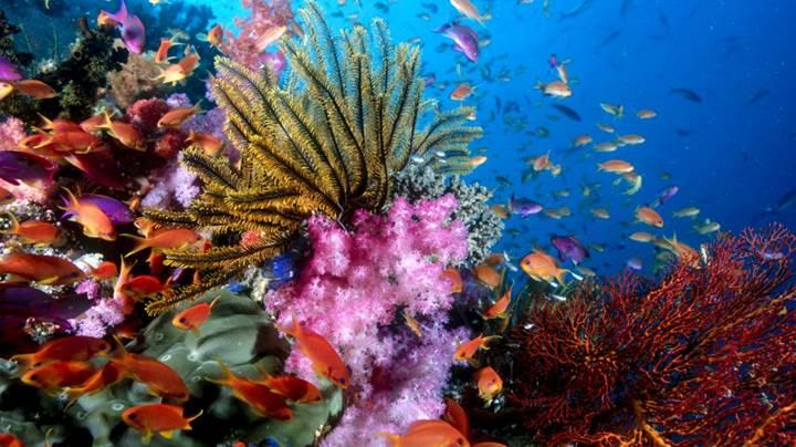 Okyanuslarda su sıcaklığının artması birçok balık türünün sonu olabilir