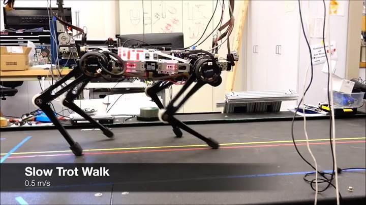 Hareketleriyle korku salan robot köpek