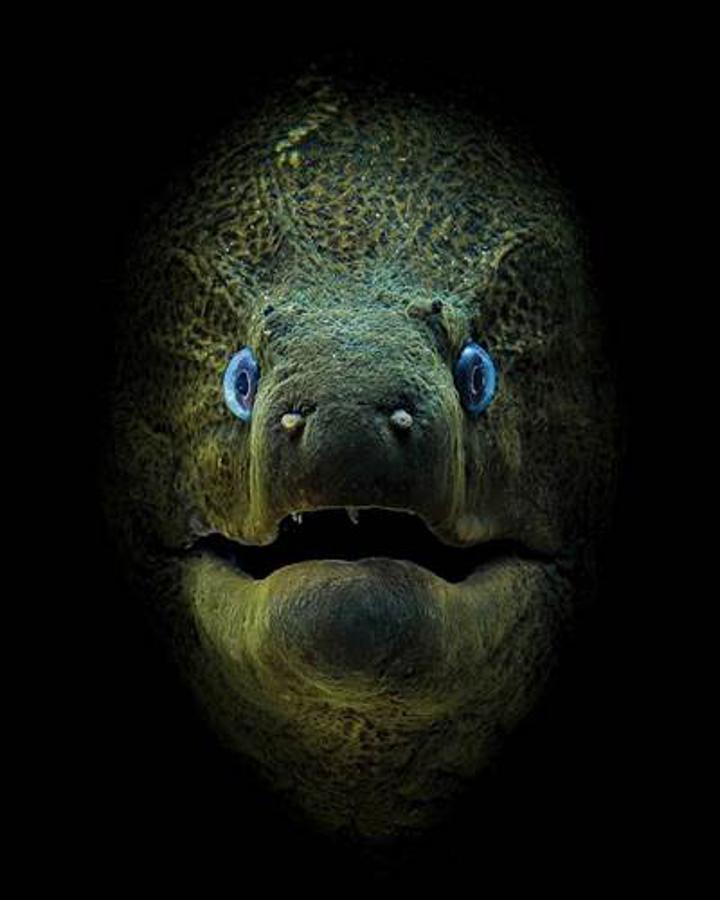 """Dünyaca ünlü su altı fotoğrafçılığı yarışması """"Through Your Lens""""in kazananları belirlendi"""