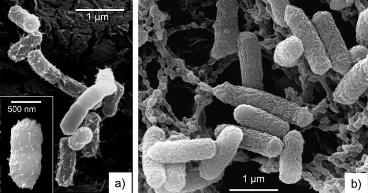 Doğal mavi kil bakterileri öldürmede etkili