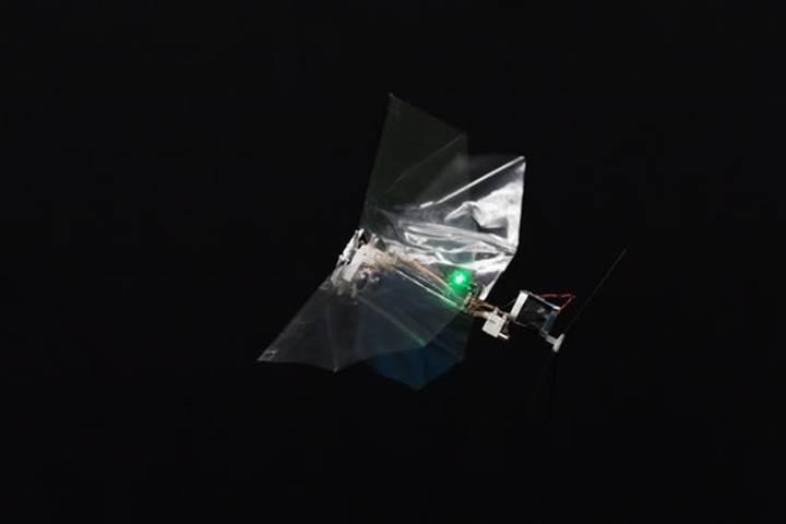 Sinekten esinlenerek geliştirilen robot: DelFly Nimble