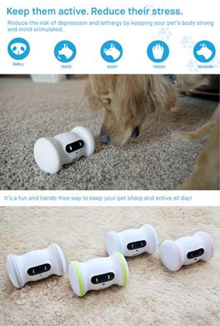 Evcil hayvanlara robot arkadaş: Varram Pet Fitness