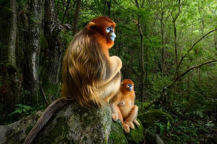 Yılın vahşi yaşam fotoğrafçılığı yarışmasının en gözde fotoğrafları