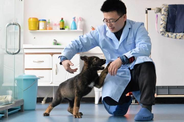 Çin bu sefer de bir polis köpeğini klonladı