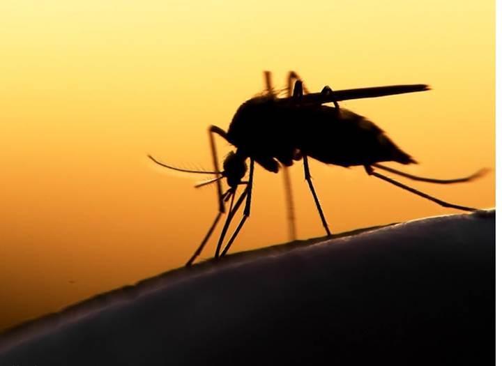 Örümcek genleri mantar genlerinin içine ekleniyor