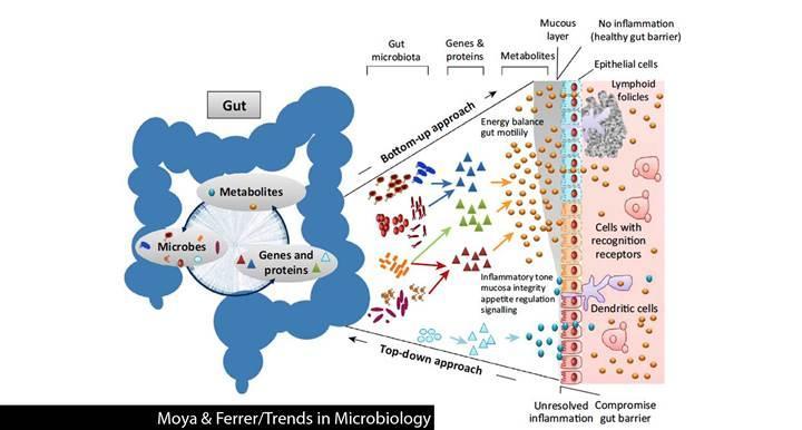 Bağırsak bakterileri ilaç testlerinde kullanılıyor