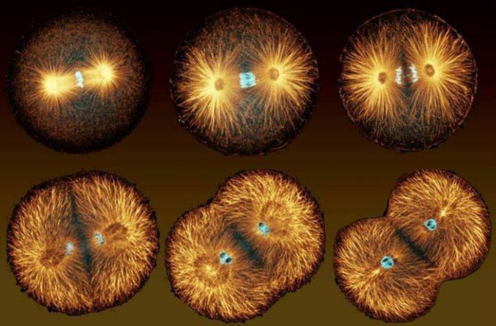 Kansere iki farklı ilaçla saldıran bilim insanları, şaşırtıcı sonuçlar elde etti