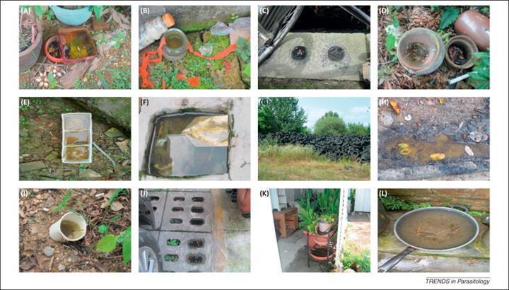 Kekik yağı ve mısır nişastasından yapılan kapsüller, sivrisineklere geçit vermiyor