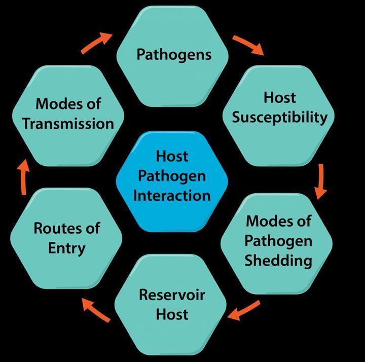 E. coli'nin enfeksiyon mekanizması aydınlatılıyor
