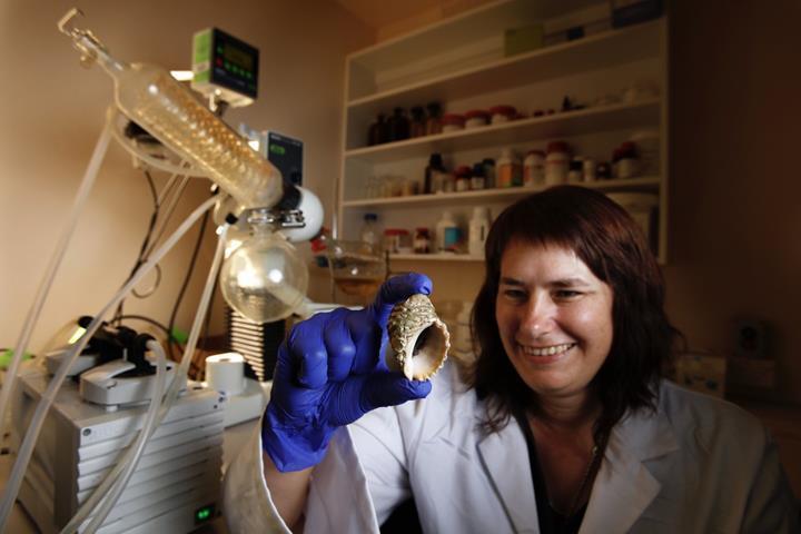 Salyangoz salgısında kanserle savaşan bileşik tespit edildi