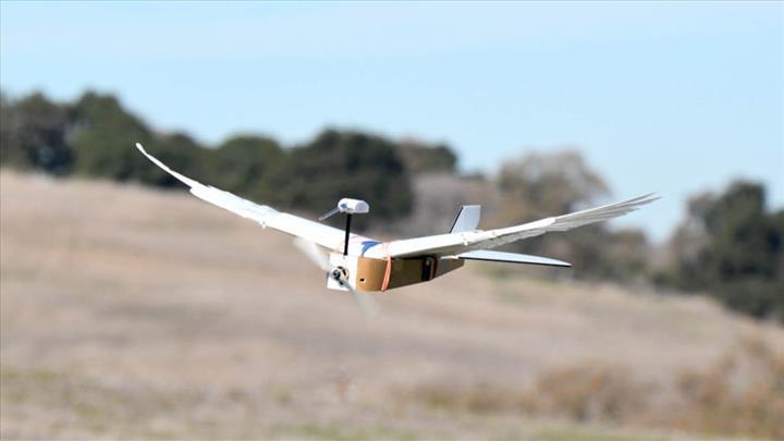 Araştırmacılar, güvercin kanatlara sahip drone yaptılar